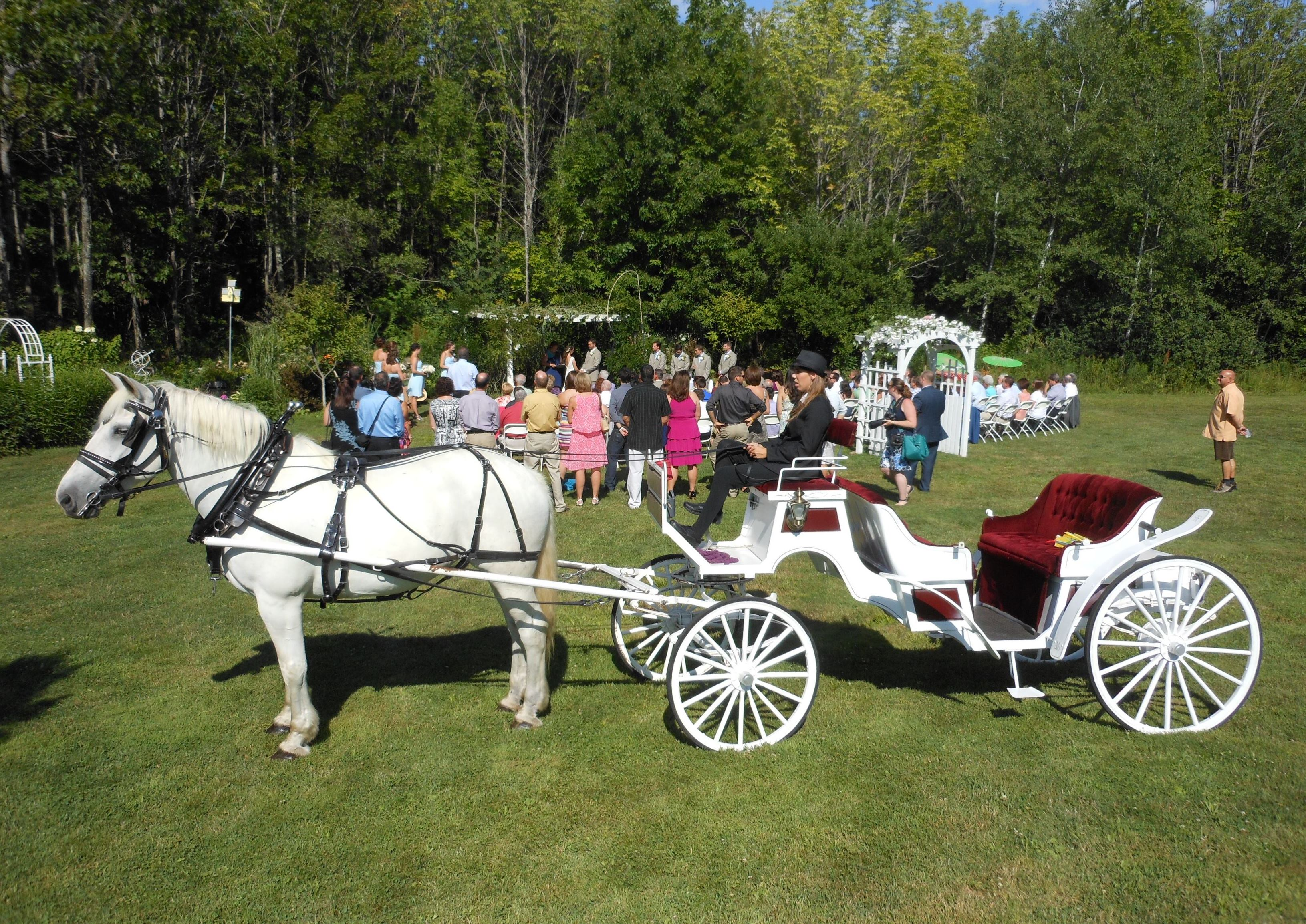Carriages, Farm Wagons, Fancy Wagons