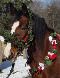 Traveller the horse dressed up for christmas